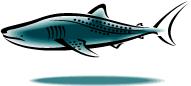 whale shark filter feeder